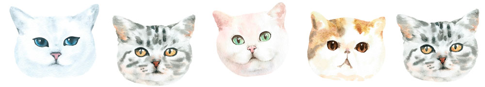 kitties adoption kennewick